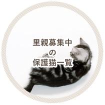 里親さん募集中の保護猫一覧