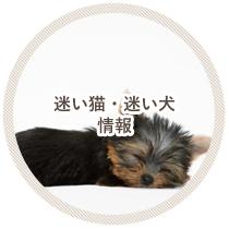 迷い猫・犬情報